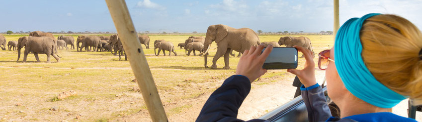 Woman taking photographs of Safari Elephants